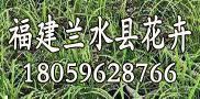 福建兰水县花卉