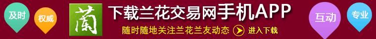 下载vwin官网交易网手机APP